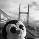 Severn bridge crossing
