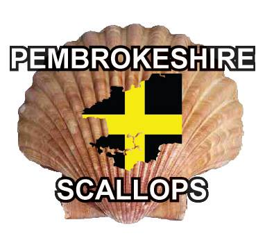 Pembrokeshire Scallops, probably the tastiest diver caught scallops in the world!!
