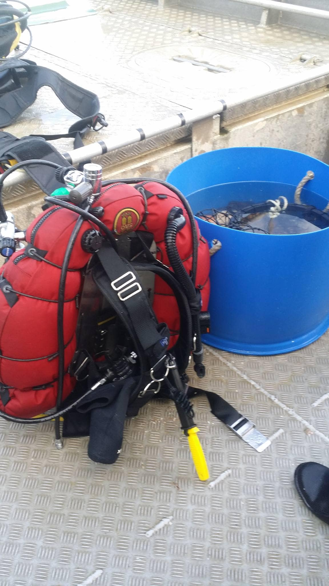 Dive gear and some of the days catch of scallops