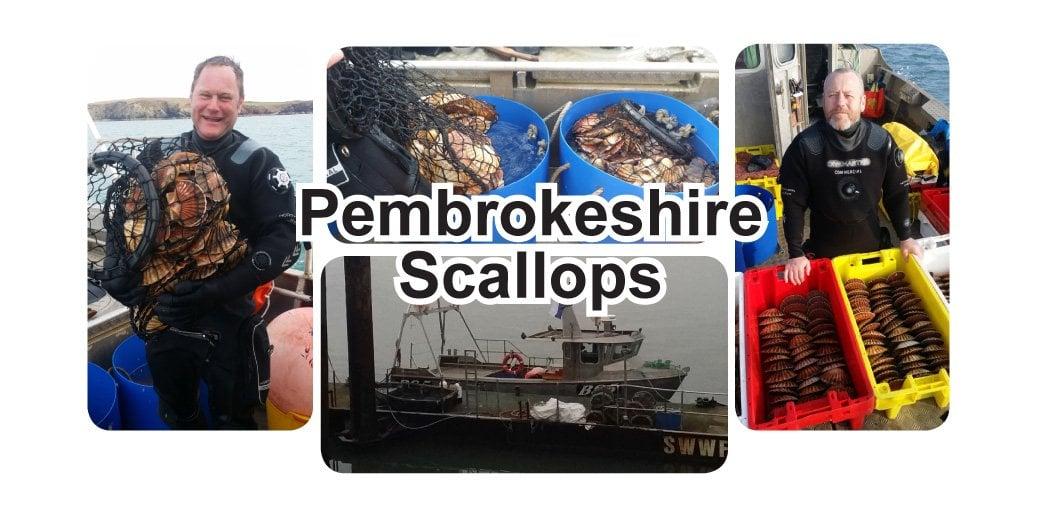 pembrokeshire_scallops