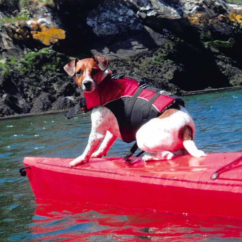Kato the jack russell terrier sat on the front of a sea kayak off the kayaking pembrokeshire coast.
